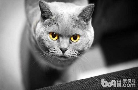 猫咪呕吐究竟有哪些原因?