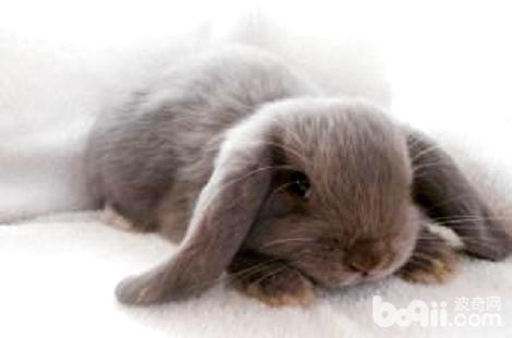 被兔子咬伤了需要打疫苗吗?