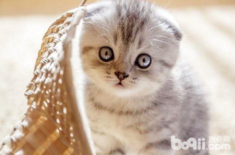 小奶猫还没长牙的时候可以吃什么?