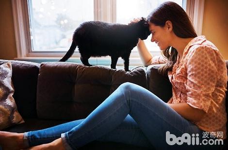 WOWO猫粮: 选猫粮只盯着排名看?适合自家猫咪的才是好的