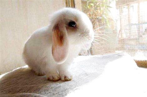 怀孕期间是可以养兔子的吗?有什么危害吗?
