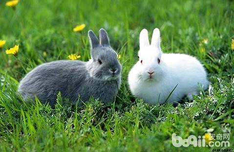 兔子可以喝生水吗?