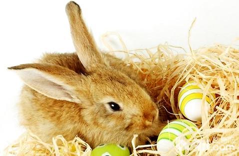 能抓住兔子耳朵把它拎起来吗?
