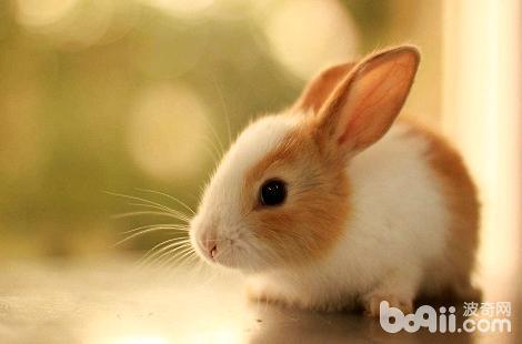 兔子的鼻子为什么会频繁抽动?