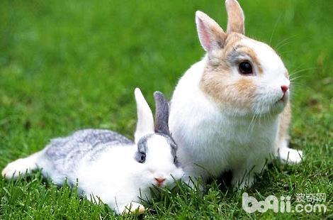 养兔子存在哪些误区?