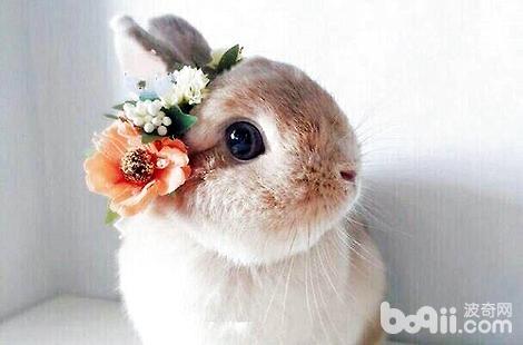 兔子身上掉毛严重是什么原因?