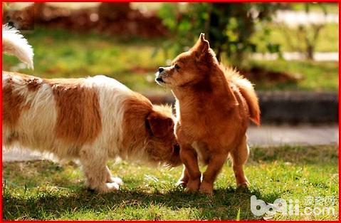 中华田园犬的眼屎比较多是什么原因导致的?