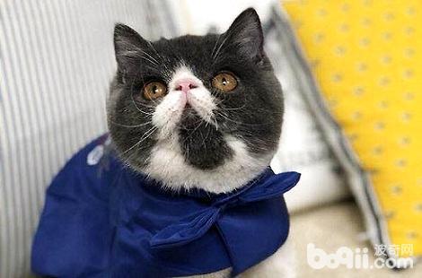 加菲猫的鼻子干燥是不是生病了?