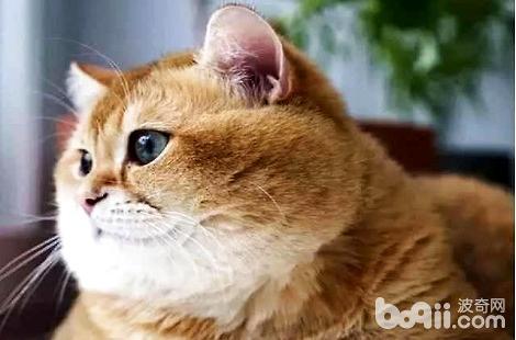 橘猫叫唤不停的五大原因,做家长的都需要知道