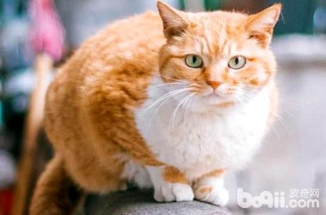 橘猫特别凶是什么原因导致的?