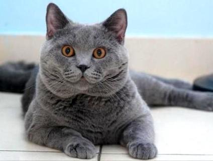 猫咪会进入你的被子,几个小技巧让你的猫咪学会回窝睡