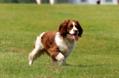 如何把777奇米影视第四色777奇米影视第四色训练成警犬