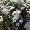 两个月小狗训练方法介绍,这样训练狗很乖