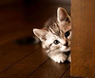 如何训练猫晚上不叫?这几点做到就不会叫了