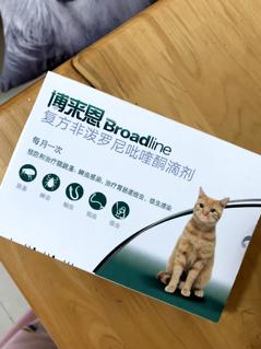 猫驱虫指南来喽!新手如何正确地给猫驱虫?