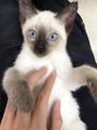 寄生蟲害人害貓,貓咪怎么驅蟲效果好?