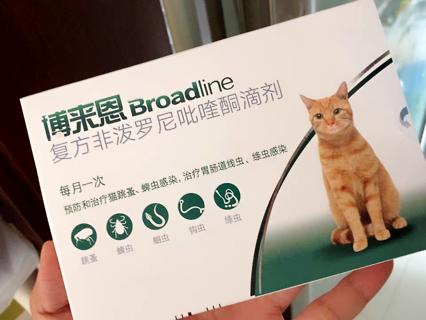 猫身上的寄生虫有什么危害?不看吓一跳!