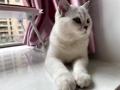猫咪耳螨怎么治好的?跟我学,其实不难!