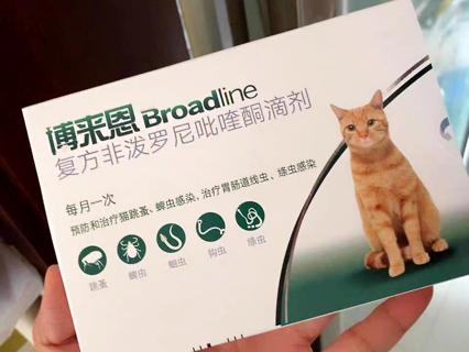 这两种方法教你猫咪耳螨怎么治,亲测有效!