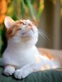 貓咪驅蟲怎么做?再不帶貓去寵物醫院驅蟲了
