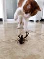 猫咪驱虫多久一次合适?标准答案来咯!
