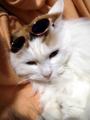 貓咪怎么驅蟲?有哪些誤區需要規避?