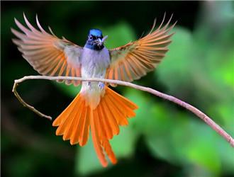 壁纸 动物 花 鸟 鸟类 雀 桌面 330_250