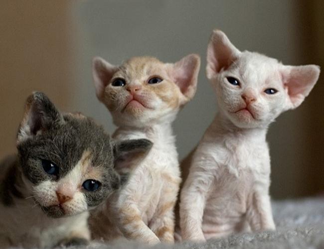 壁纸 动物 猫 猫咪 小猫 桌面 650_500