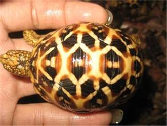 基本信息栏 中文名 : 龟体外寄生虫 1 宠物龟体外寄生虫的病因分析