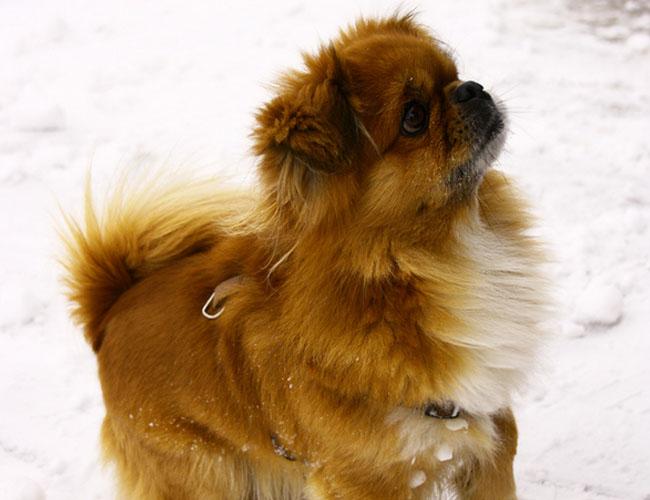 西藏最值钱的动物