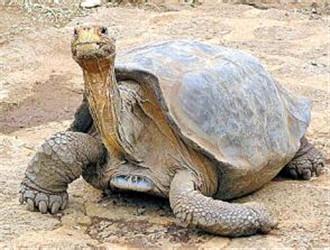 加拉帕戈斯象龜