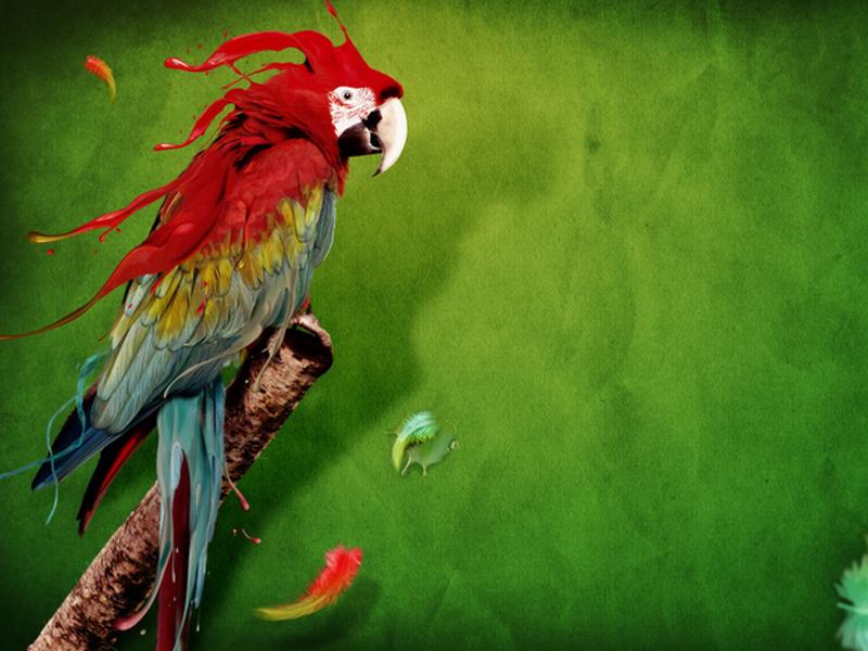鹦鹉疱疹病毒
