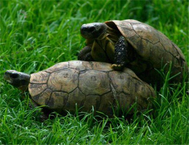 龟轻泥作品步骤图片