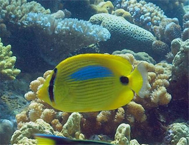 壁纸 海底 海底世界 海洋馆 水族馆 650_500