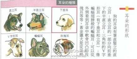 狗狗耳朵的形状