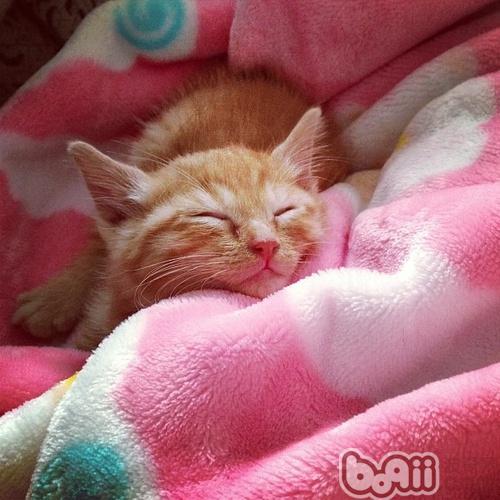 好可爱的小黄猫