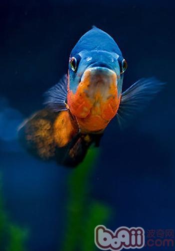 减少鱼类寄生虫的方法
