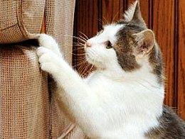 猫挠东西,常见的解释是它在磨爪子,多数情况下,这解释是对的.