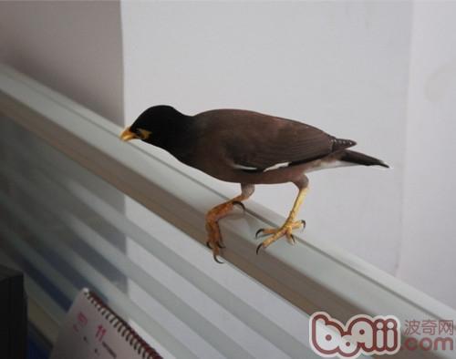 台湾 台南/台湾的台南地方法院去年查获一批非法贩卖的鸟类,其中有一只年...