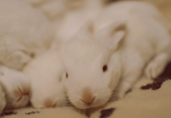 十天的兔宝宝,可爱翻了!