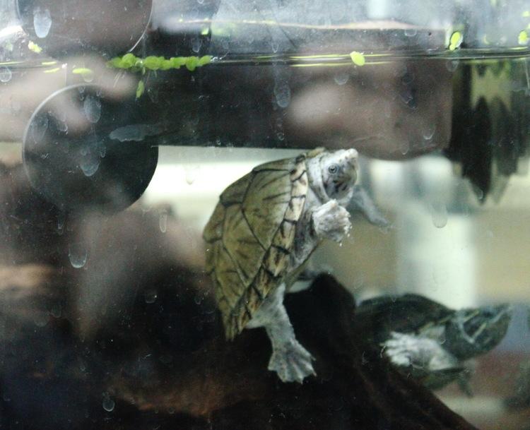 家中新养小龟的环境参考
