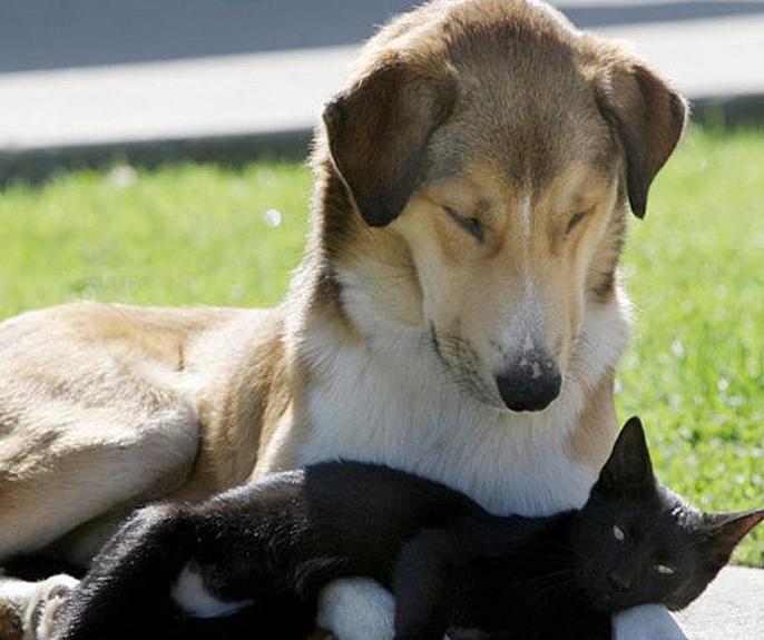 小小猫和大大狗情意绵绵