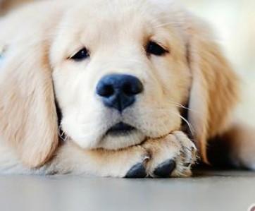 狗狗就是这样的可爱!!!