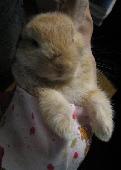 可爱兔子图片,兔子图片大全|镜头物语 - 波奇宠物网