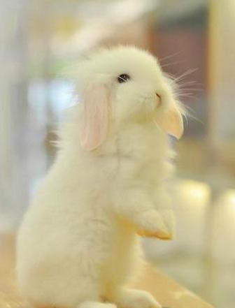 可爱兔子图片,兔子图片大全 镜头物语