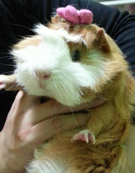 萌猪头像可爱动物图片