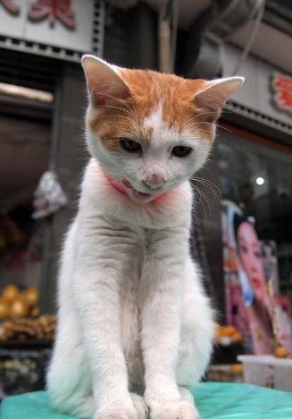 小猫图片可爱佳亲亲