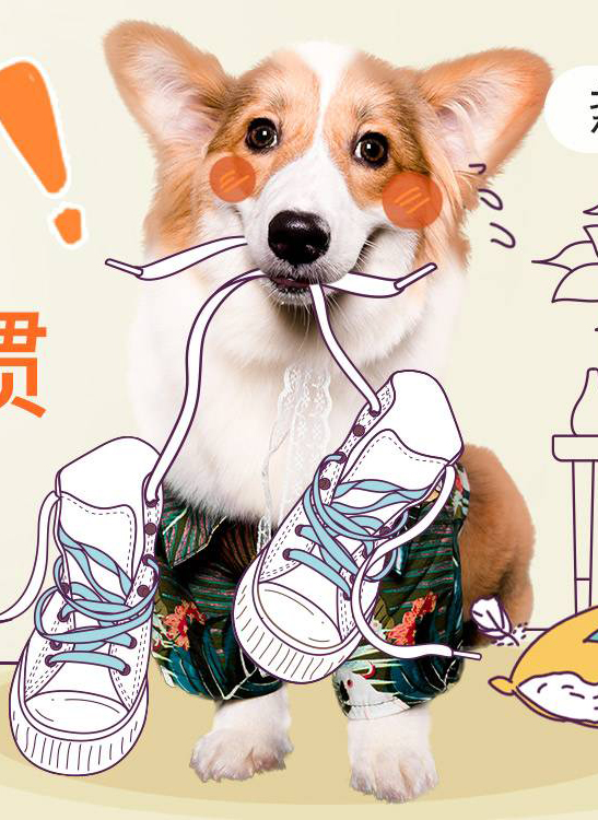 【每周-社區活動-招新】寵物圈里最容易拿獎的活動,沒有之一