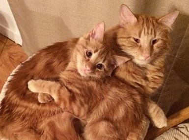 两只流浪猫被有爱主人收养,一见如故~