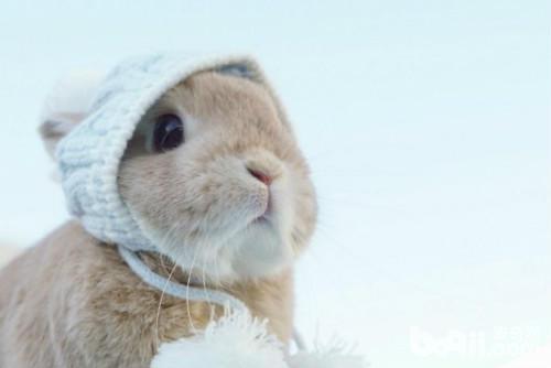 冬季恋兔!为啥有这么可爱的兔子
